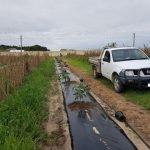 Drip Irrigation & Plastic Mulch