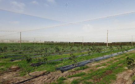 Netting area planting