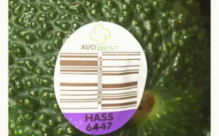 Avowest Avocados sticker